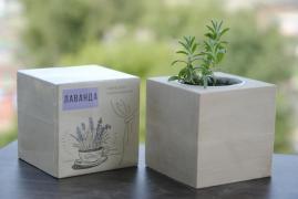 Купити екокуб, що ростуть олівці, нанесення лого, опт